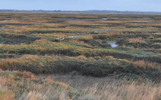 FACT Salt Marsh